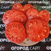 самые вкусные минусинские томаты