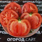 помидор московский семена купить