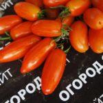 помидор сладкий касади