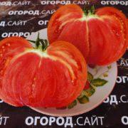 помидор церковь купить семена