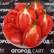 томат минусинское воловье сердце