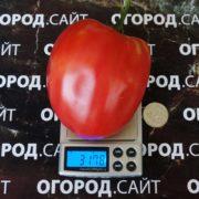 томат минусинское воловье сердце семена купить