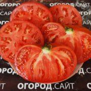 томат вова путин семена купить