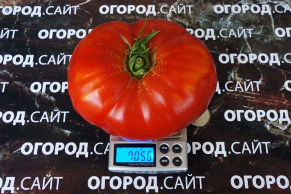 Томат Лев минусинский
