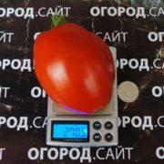 pomidor-podsinskaya-liana-minusinskaya-2