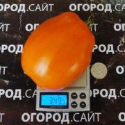 минусинские стаканы томат описание фото