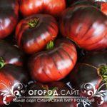 купить семена помидоров у частных коллекционеров