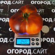 томат люсид джем характеристика