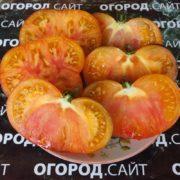 томат яркий самоцвет