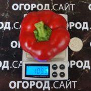 Перец сладкий сорт Топепо Россо
