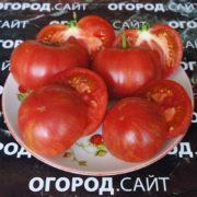 коллекционные семена томатов от коллекционеров