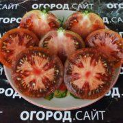 томат черномор фото