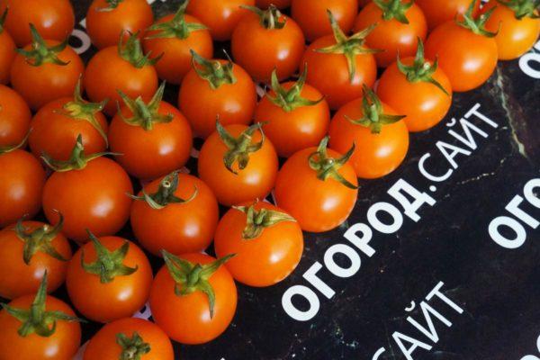 томат семена черри купить