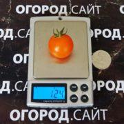сладкие оранжевые черри для засолки