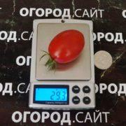 сладкий черри томат сорт чио чио сан