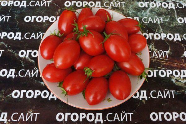 сладкие помидоры чио чио сан фото