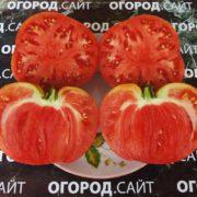 характеристика томата чудо земли