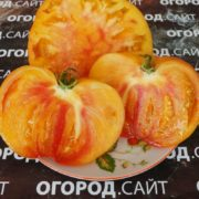 томат гавайский ананас описание фото