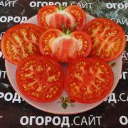 Томат Граффити розовый