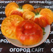 семена томатов купить у коллекционера
