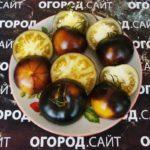 семена томатов т 34 купить