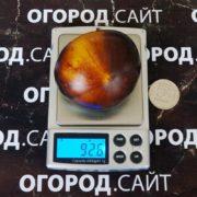 томат рот 34 описание сорта фото