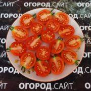 советский сорт томатов лебяжинский