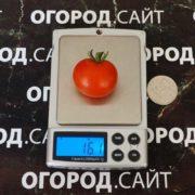 микро томат Малюсенький Том