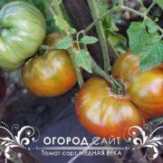 томат медная река фото урожайность