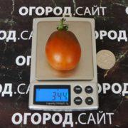 купить томат шоколадный зайчик