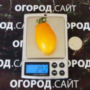 вкусный сладкий сорт томатов тайко