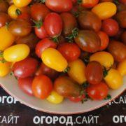 вкусные сладкие томаты черри