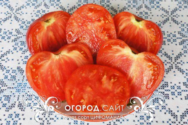 цифомандра томат фото