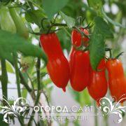 томат фляшен купить