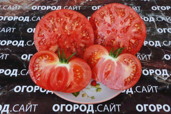 томат гигант новикова характеристика и описание сорта