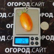 томат стыдливый румянец, блаш купить
