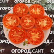 Томат Алпатьева 905А