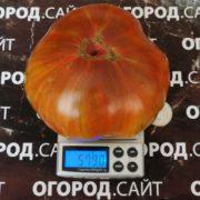 Томат Чёрный ананас