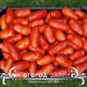 томат сорт дрова купить семена