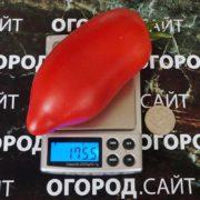 Томат Минусинский длинный розовый