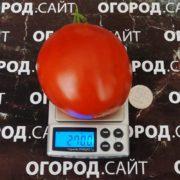 Томат Минусинский сахарный