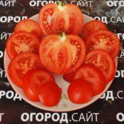 Томат Минусинский урожайный
