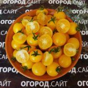 Томат Желтый лилипут