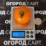 pomidor-zlatova-3