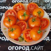 pomidor-zlatova-4