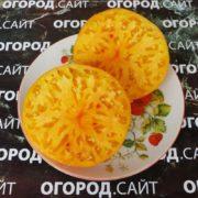 Томат Оранжевый русский 117