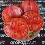 помидор люсиль тильсон