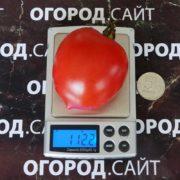 томат сызранская пипочка характеристика