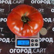 Томат Сызранский