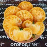 Томат Апельсиновый крем